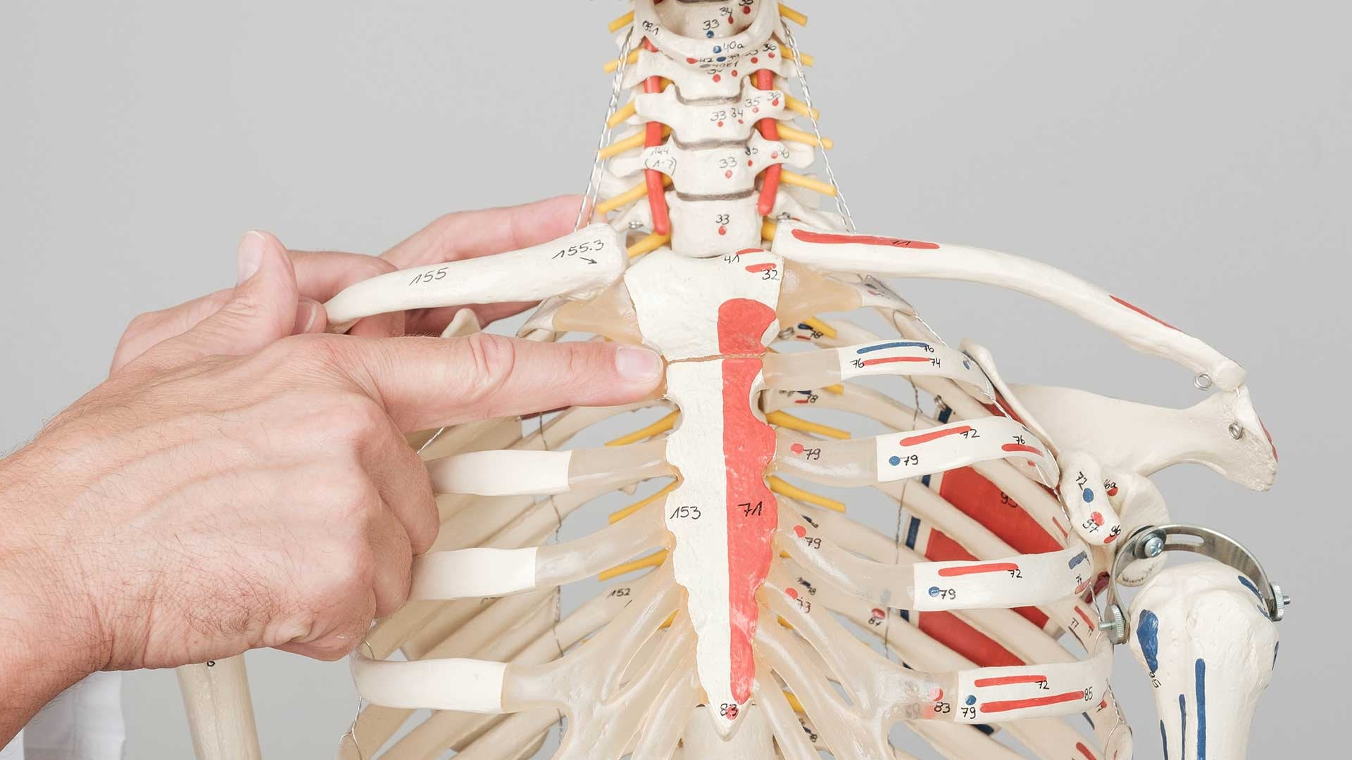Bolesti-kostiju-i-hrskavice